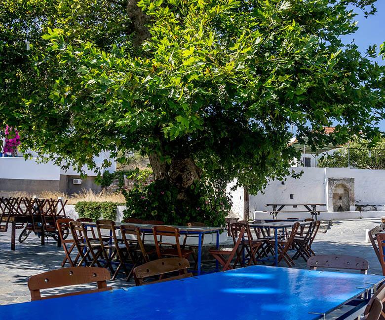 taverna-platonos-tree